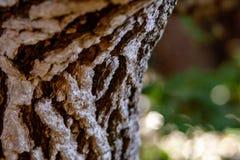 Fermez-vous de l'écorce d'arbre structurelle image libre de droits