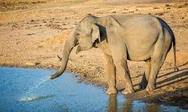 Fermez-vous de l'éléphant d'Asie sauvage injectant l'eau Photo libre de droits