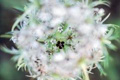 Fermez-vous de l'étamine de fleur Photos stock