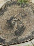 Fermez-vous de l'anneau de tronc d'arbre au sol photographie stock libre de droits