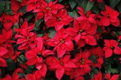 Fermez-vous de l'arbre de Noël Images libres de droits