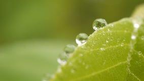 Fermez-vous de l'eau de rosée sur les feuilles vertes avec le fond brouillé de nature banque de vidéos
