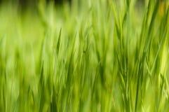 Fermez-vous de l'herbe épaisse fraîche avec boken Photographie stock libre de droits