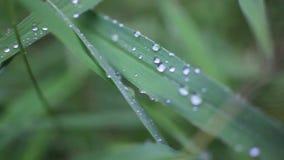 Fermez-vous de l'herbe avec des baisses de pluie macro HD banque de vidéos