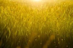 Fermez-vous de l'herbe verte Images libres de droits