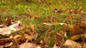 Fermez-vous de l'herbe verte avec les feuilles d'automne jaunes, tir de grue banque de vidéos