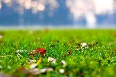 Fermez-vous de l'herbe verte, des feuilles tombées et d'un fond froid de forêt photos stock