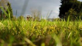 Fermez-vous de l'herbe - vue du ` s de fourmi banque de vidéos