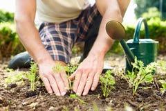 Fermez-vous de l'homme plantant des jeunes plantes en terre sur l'attribution Images libres de droits