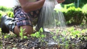 Fermez-vous de l'homme plantant des jeunes plantes en terre sur l'attribution banque de vidéos