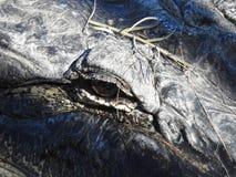 Fermez-vous de l'oeil d'alligator images libres de droits