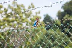 Fermez-vous de l'oiseau du Roi Fisher Photo libre de droits