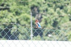 Fermez-vous de l'oiseau du Roi Fisher avec le fond de bavures Photo stock