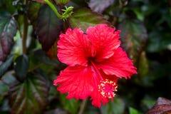 Fermez-vous de la belle fleur tropicale photos stock