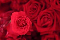 Fermez-vous de la belle rose de rose dans le bouquet de fleur Photographie stock