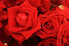 Fermez-vous de la belle rose de rouge dans le bouquet de fleur Photos stock