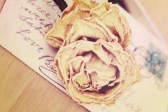Fermez-vous de la carte postale rose et vieille sèche Style de vintage de lumière molle Photos stock