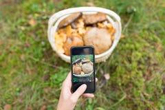 Fermez-vous de la femme photographiant des champignons images stock