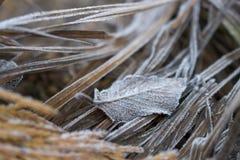 Fermez-vous de la feuille avec les points minuscules de Frost se reposant dans les herbes Image libre de droits