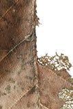Fermez-vous de la feuille sèche par automne, feuillage brun de gâchette, macro vue sur la texture s'est fané des feuilles d'autom images stock