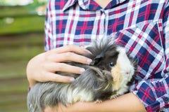 Fermez-vous de la fille s'occupant du cobaye d'animal familier Image libre de droits
