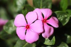 Fermez-vous de la fleur avec le fond vert image stock