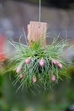 Fermez-vous de la fleur de bromélia Photos libres de droits