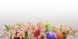 Fermez-vous de la fleur de Lilium Photographie stock libre de droits