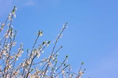 Fermez-vous de la fleur de ressort photographie stock libre de droits