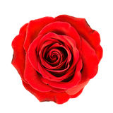 Fermez-vous de la fleur rose rouge-foncé Photo libre de droits