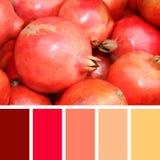 Fermez-vous de la grenade sur le marché échantillons de palette de couleurs Images libres de droits