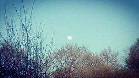 Fermez-vous de la lune bleue Photos libres de droits