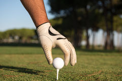 Fermez-vous de la main de joueurs de golf plaçant la boule sur la pièce en t Images libres de droits