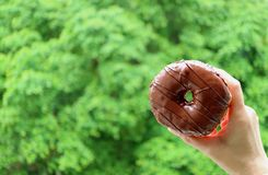 Fermez-vous de la main de la femelle tenant un beignet recouvert de chocolat avec le feuillage vert vibrant brouillé à l'arrière- photo stock