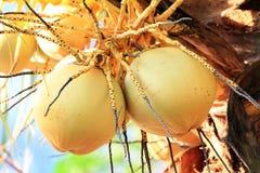 Fermez-vous de la noix de coco Image libre de droits