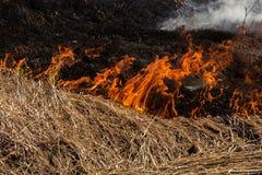 Fermez-vous de la paille brûlante Image stock