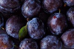 Fermez-vous de la prune sur l'obscurité Photographie stock