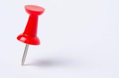 Fermez-vous de la punaise rouge Image stock