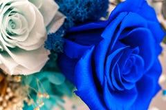Fermez-vous de la rose de bleu images stock