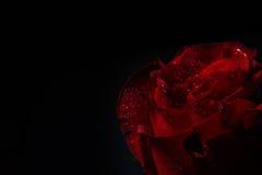 Fermez-vous de la rose de rouge avec l'éclairage dramatique sur le fond noir photos stock