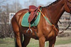 Fermez-vous de la selle sur le dos de cheval Photo libre de droits