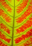Fermez-vous de la texture colorée de feuilles d'automne Images stock