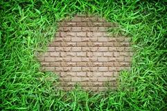 Fermez-vous de la texture de fond d'herbe verte Image stock