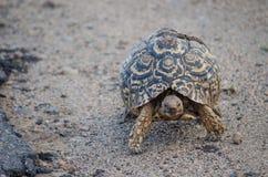 Fermez-vous de la tortue photo libre de droits