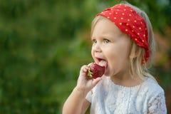 Fermez-vous de peu de fille mangeant la fraise mûre en nature L'enfant apprécie une baie délicieuse Copiez l'espace nourriture de photo stock