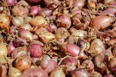 Fermez-vous de sécher le cepa du pays coloré d'allium d'oignons sur le fond net de dessiccateur Le tas de la variété sèche nature photographie stock