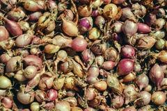 Fermez-vous de sécher le cepa du pays coloré d'allium d'oignons sur le fond net de dessiccateur Le tas de la variété sèche nature photo libre de droits