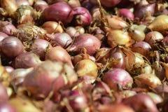 Fermez-vous de sécher le cepa du pays coloré d'allium d'oignons sur le fond net de dessiccateur Le tas de la variété sèche nature image libre de droits
