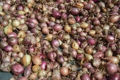 Fermez-vous de sécher le cepa du pays coloré d'allium d'oignons sur le fond net de dessiccateur Le tas de la variété sèche nature images stock