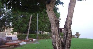 Fermez-vous des arbres étonnants de vue avec les feuilles vertes dans le jardin près pour échouer le fond étonnant clips vidéos